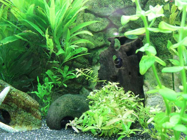 Aquarium Guide Woche 1