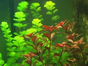 Aquarium Einrichten - Bepflanzung