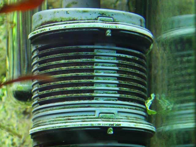 Algen im Aquarium - Filtereinlass
