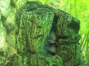 Aquarium-Dekoration: Höhlen