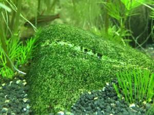 Aquarium-Dekoration: Steine