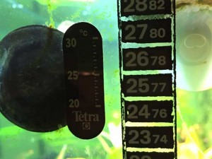 Aquarium Zubehör Thermometer