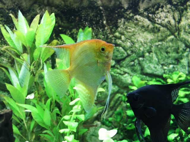 10 Fehler beim Aquarium Einrichten