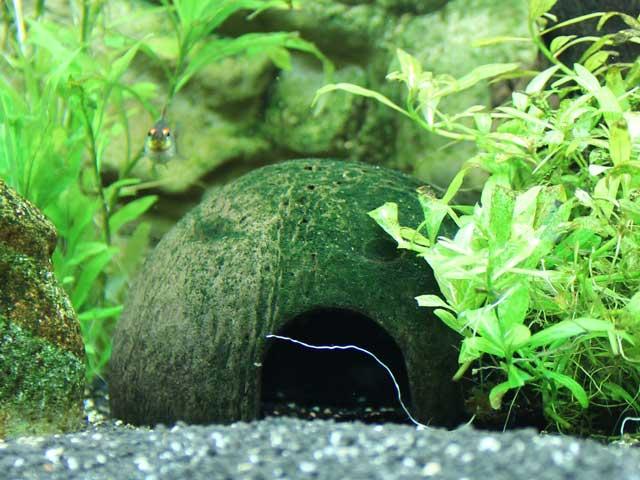 Aquarium Guide Woche 3 Wasserwerte