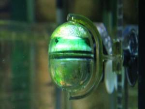 CO2-Aquarium-Düngung-Langzeittest