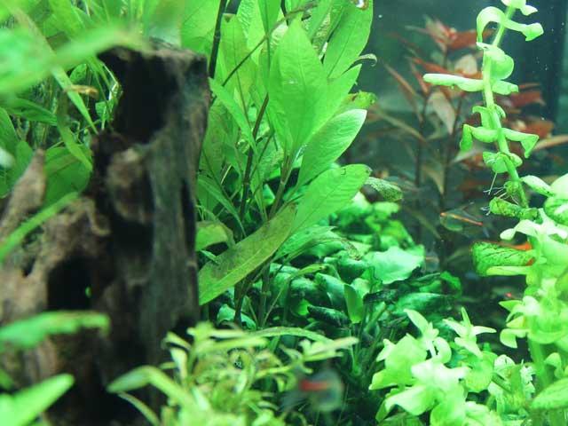 Aquarium Guide Woche 5 - Pflege
