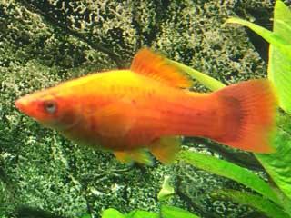 Aquarium Fische Ubersicht Uber Die Wichtigsten Arten