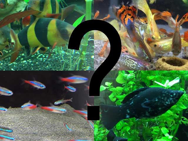 Aquarium Fische Übersicht Arten