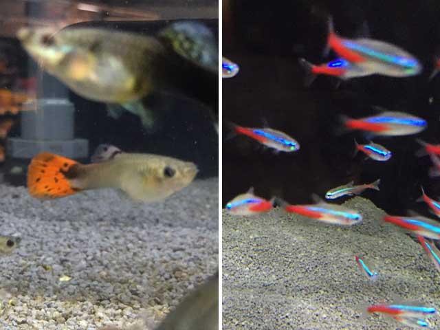Aquarium-Nachwuchs