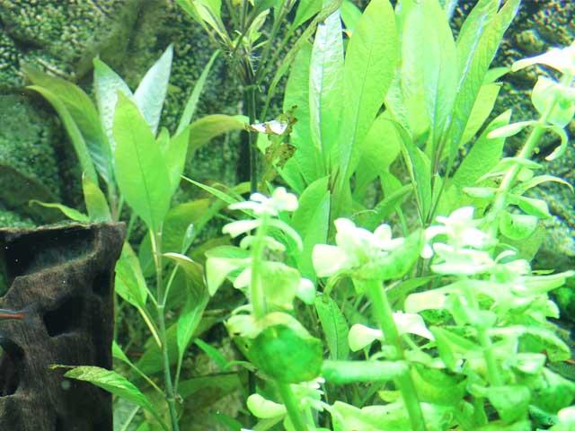 Aquarium Wasser trüb? Tipps für eine klare Sicht!