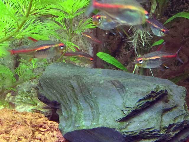 Aquarium-Anfänger 5 Fragen & Antworten