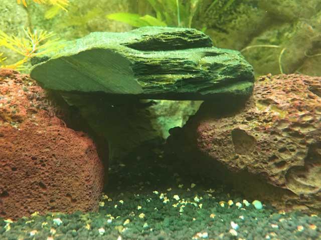 Aquarium Anfänger: 7 Tipps