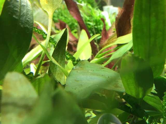 Aquarium Dünger Pflanzen Nahrung