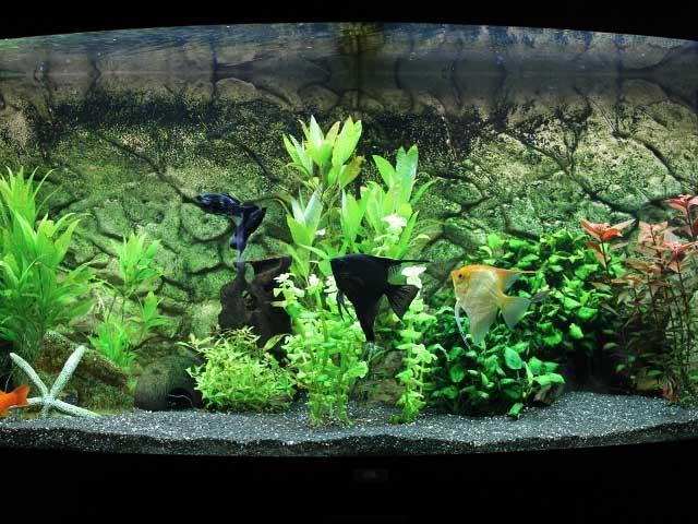 Aquarium Guide Woche 6