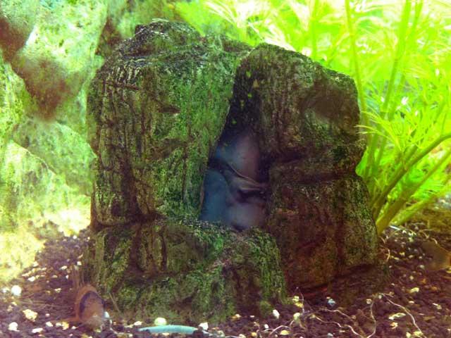Aquarium-Höhle