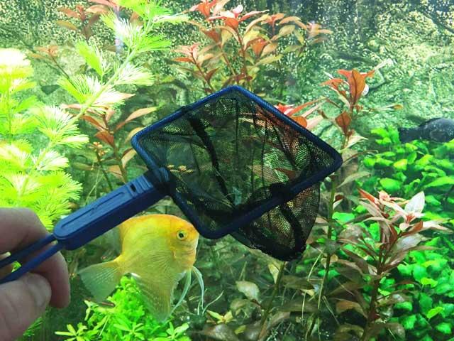 7 Tipps für den Aquarium-Profi