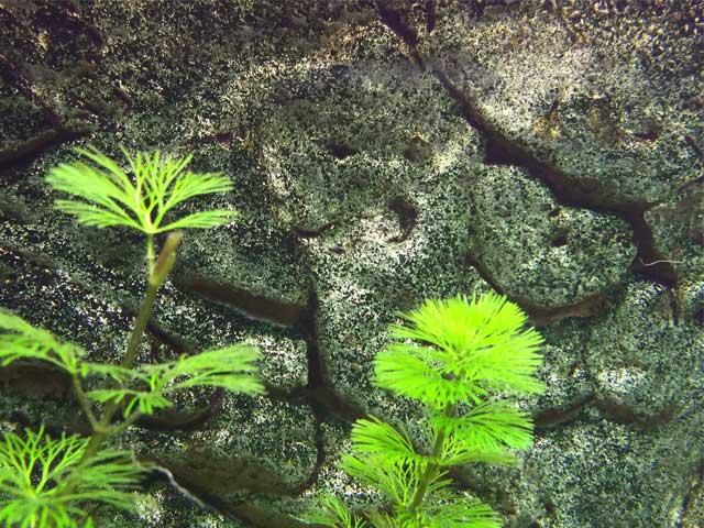 Aquarium-Rückwand: Unverzichtbar