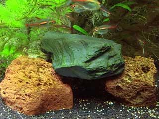 Steine im Aquarium: Beliebte Deko