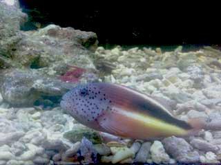 Süßwasser Meerwasseraquarium Unterschiede Fisch