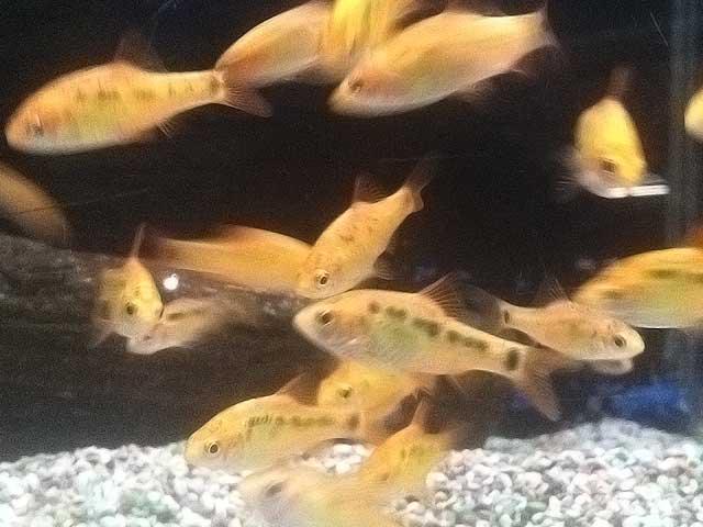 Aquarium-Fische: Grundlagen der artgerechten Haltung