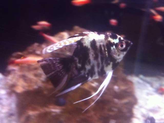 Aquarium-Fische gesund erkennen