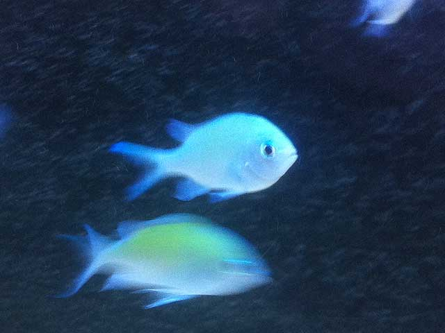 Aquarium-Fische kaufen: Quarantäne-Becken