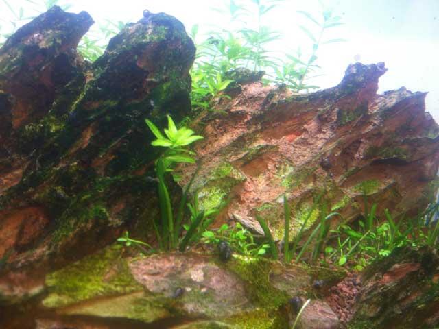 Garnelen-Aquarium Einrichten Fragen