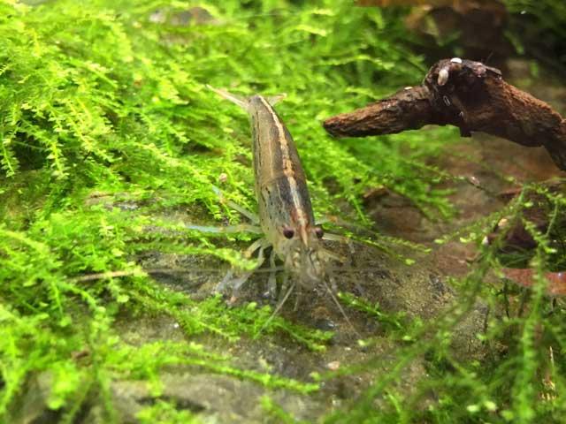 Garnelen Aquarium Tipps Haltung