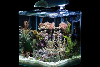 meerwasseraquarium komplettset im testbericht. Black Bedroom Furniture Sets. Home Design Ideas