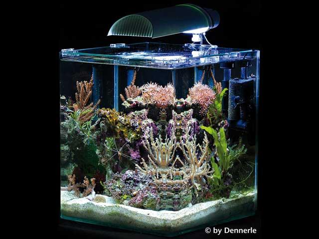 Meerwasseraquarium Komplettset Test
