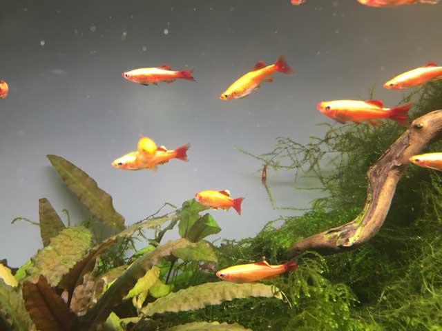 Nano-Fische
