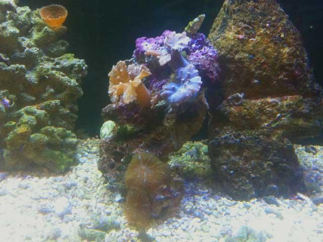 Salzwasseraquarium 5 Fakten