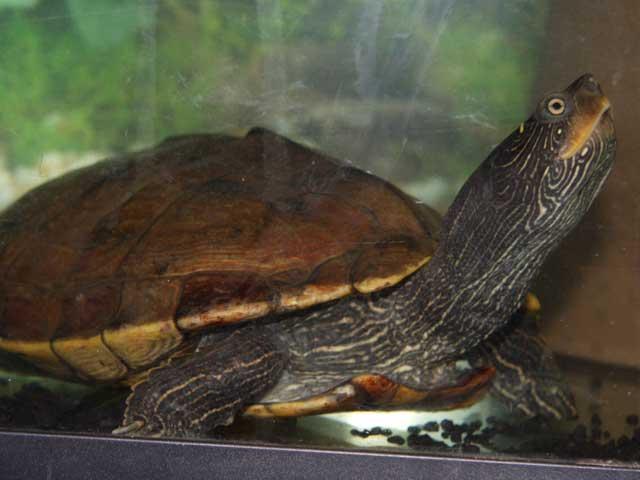 Wasserschildkröten-Aquarium Fragen und Antworten
