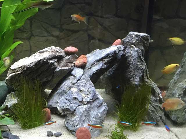 Aquarium Zubehör Werkzeuge