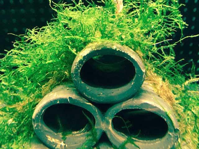 Nano Aquarium einrichten: 8 Schritte