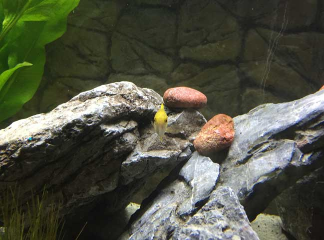 Juwel Aquarium einrichten
