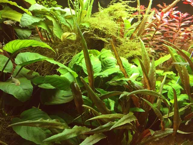 CO2 Anlage Aquarium Pflanzenwachstum