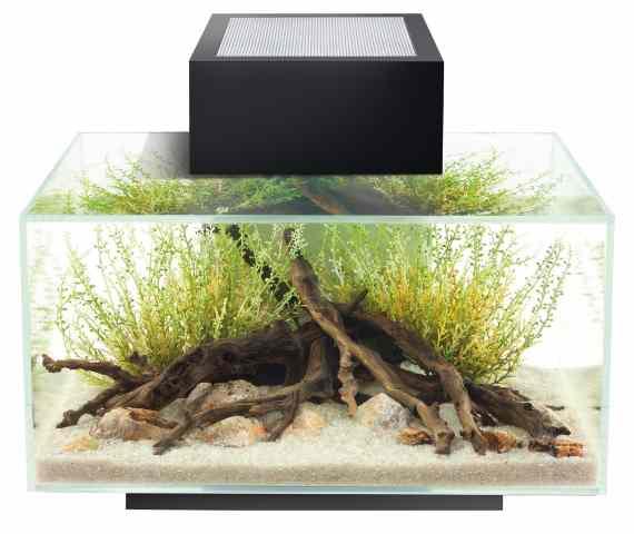 Nano Aquarium Fluval Edge