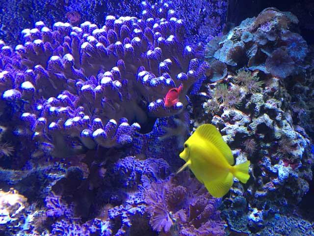 Meerwasseraquarium Komplettset