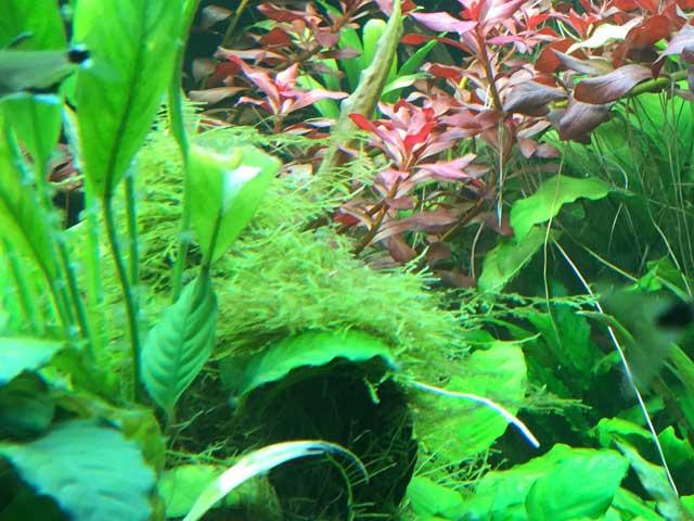 Aquarium Pflanzen Wachsen nicht Tipps
