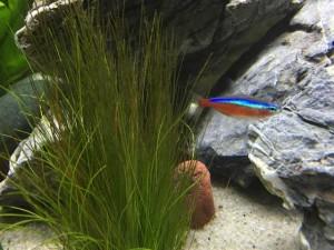 Aquarium Pflanzen Wachsen nicht Dünger