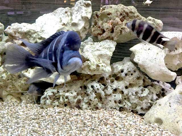 Aquarium ohne Pflanzen