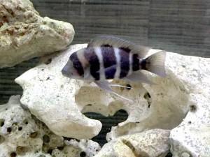 aquarium ohne pflanzen welche fische