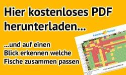fische_passen_zusammen_pdf_download_banner