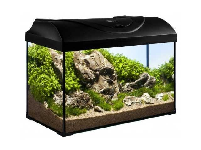 aquarium pflanzen wachsen nicht 7 tipps ohne co2. Black Bedroom Furniture Sets. Home Design Ideas
