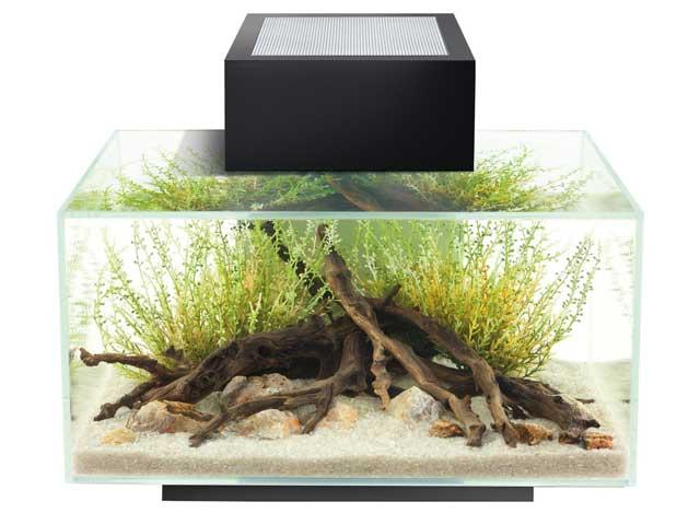 fluval edge i das beliebte nano aquarium set im test. Black Bedroom Furniture Sets. Home Design Ideas
