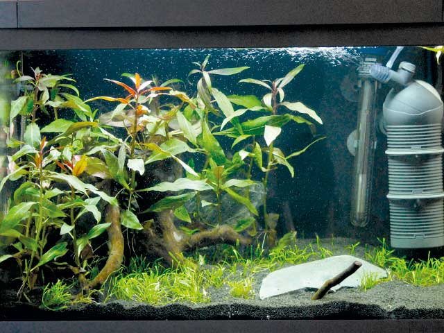 Aquarium warum CO2?