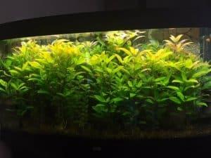 Aquarium Schneckenfalle Test