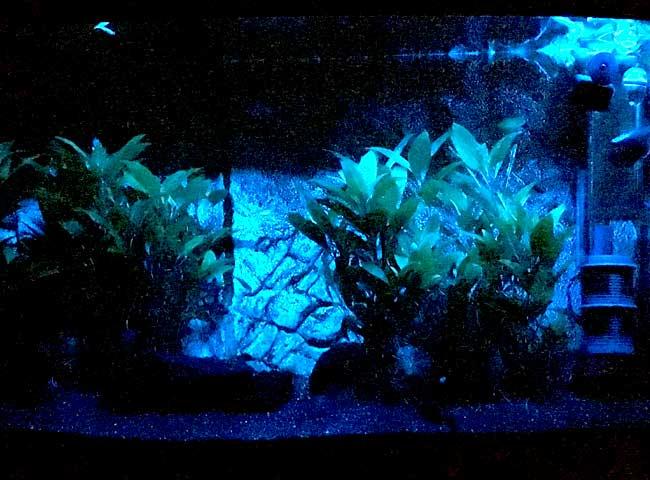 Aquarium Mondlicht Test